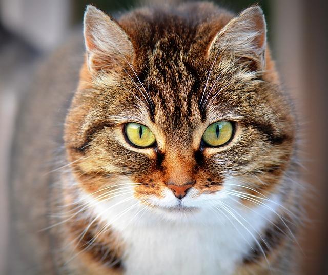 החתול מתלונן בכל פעם שהוא הולך לארגז? צריכה להידלק לכם נורה אדומה