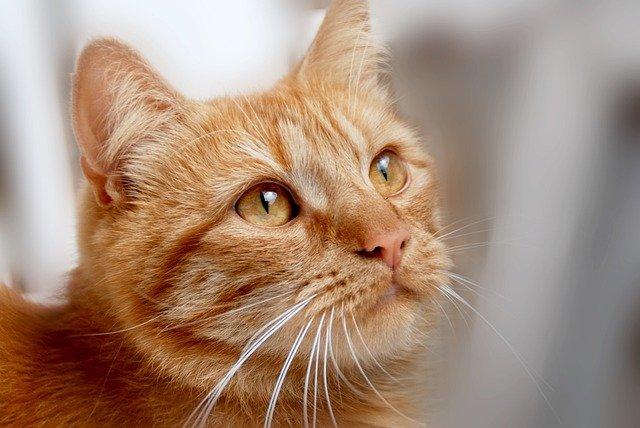 רשתות להגנה על חתולים