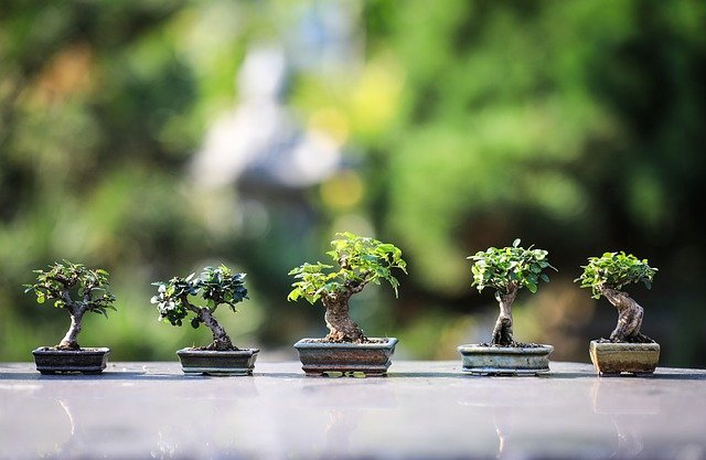 עצים ננסיים